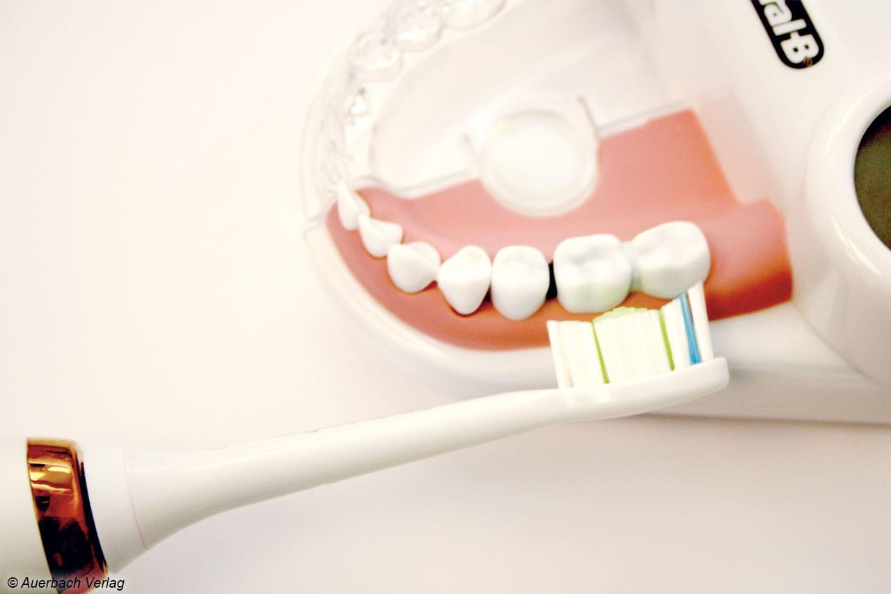 In der Zahnarztpraxis wird am Modell vorgeführt, wie die Borsten bis in die Zahnzwischenräume gelangen