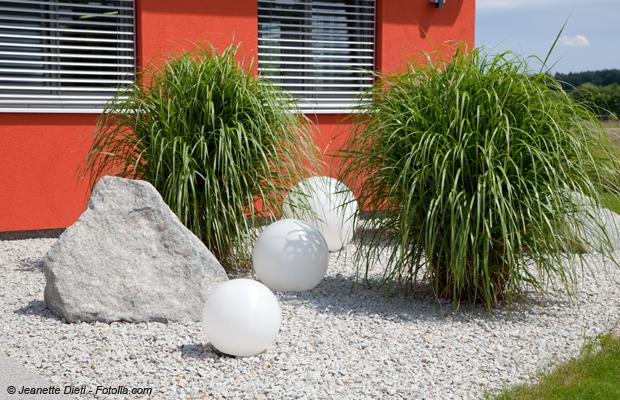 exotische zimmerpflanzen f r die wohnung haus garten test. Black Bedroom Furniture Sets. Home Design Ideas