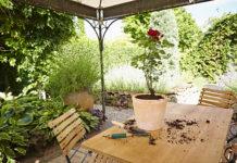 Bei der Bepflanzung von Kübeln empfiehlt es sich, die Floragard Bio Rosenerde ohne Torf unvermischt zu verwenden