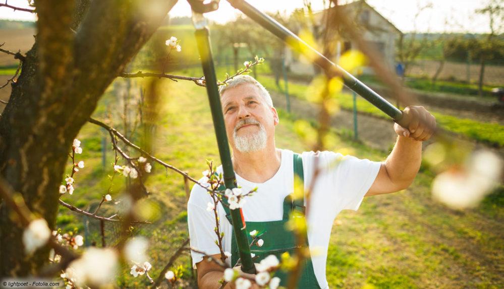 Baumschnitt Poolreinigung und Rasenpflege Haus & Garten