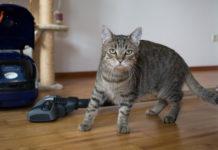In die Flohprophylaxe in der Wohnung muss auch die Umgebung des Haustieres einbezogen werden