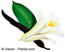 © Xavier - Fotolia.com