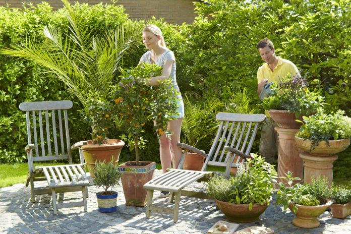 Floragard Zitruspflanzenerde mit spezieller Rezeptur – damit das Zitronenbäumchen auch in hiesigen Breitengraden gut gedeiht