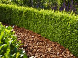 Floragard Pinien-Rinde ist dekorativ, hält die Feuchtigkeit im Boden und vermindert den Unkrautwuchs. Das Produkt eignet sich auch zur Abdeckung von Kübeln