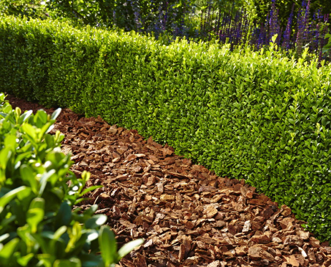 Floragard Mulch Pinienrinde 15-25 mm 60 L • mittel • dekorativer Bodenbela