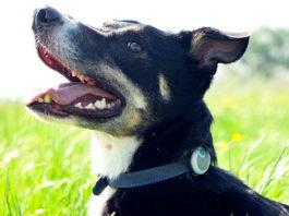 Der Monitor Animo für Hunde sorgt für ein besseres Verständnis und das Wohlergehen der Vierbeiner