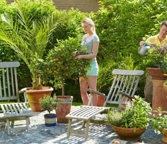 Nach der Frühjahrskur für Zitronenbäume und Co. sorgen mediterrane Pflanzen für südliches Flair auf der Terrasse.