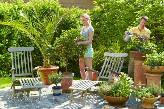 Nach der Frühjahrskur für Zitronenbäume und Co. sorgen mediterrane Pflanzen für südliches Flair auf der Terrasse
