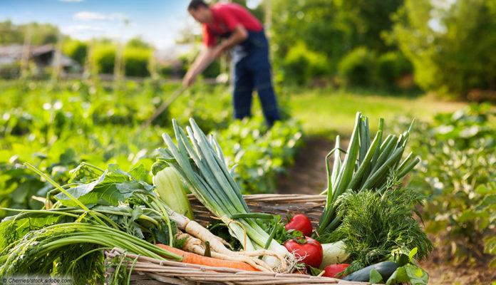 Im Garten Gemüse anbauen