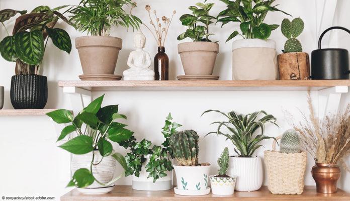 Welche Zimmerpflanzen brauche ich